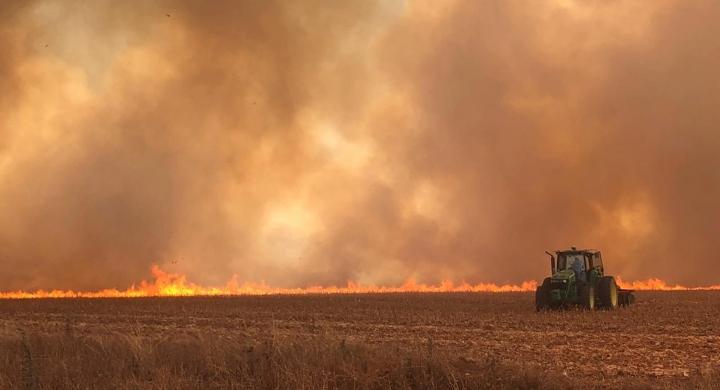 #Incêndio de grande proporção atinge milharal e canavial em fazendas em Campo Novo do Parecis (MT)