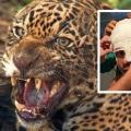 Onça pintada ataca homem dentro de aldeia indígena em MT