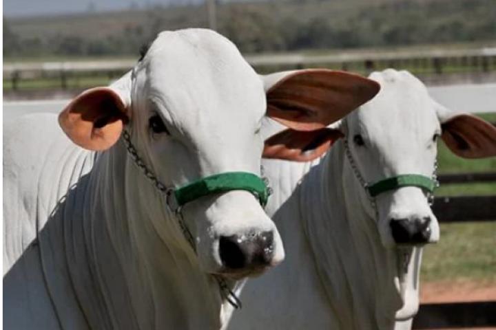 Mato Grosso já é o maior exportador de carne bovina do país
