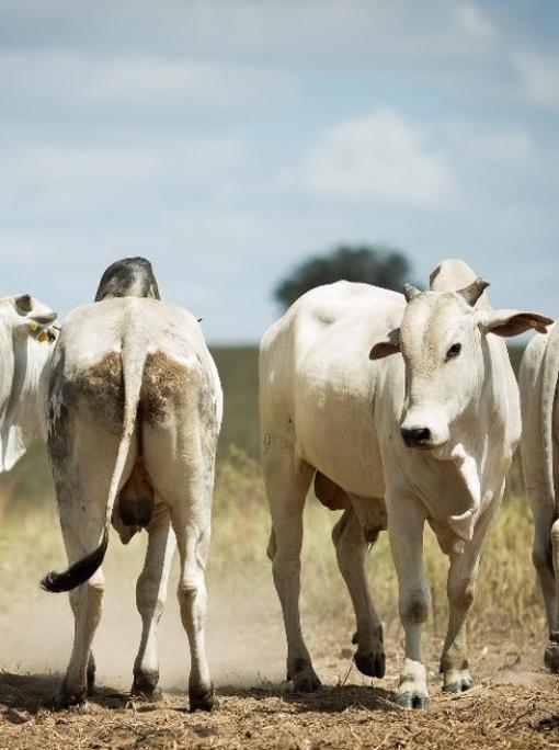 Exportações de carne em março aumentam 37,7% em relação ao mês anterior em MT