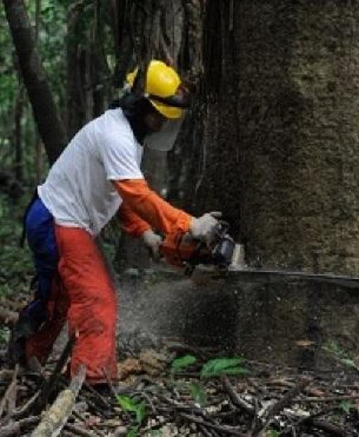 PGJ reafirma compromisso do MP com combate a crimes ambientais em Juína e região