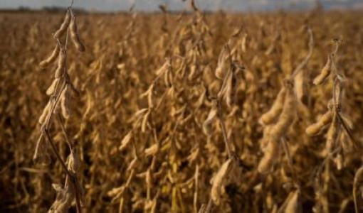 Produção agrícola pode cair 30% sem redução de emissões até 2030