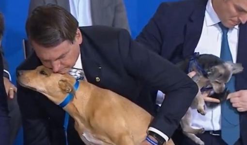 Bolsonaro sanciona lei que proíbe eutanásia de cães e gatos